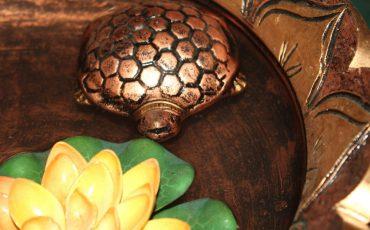 tortoise, water, feng, shui