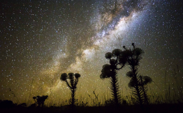 1 Noite nos campos floridos do Parque Nacional das Sempre Vivas. Creative Commons